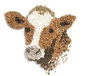 Комбикорм для коров КК60П