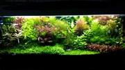 Удобрения(микро,  макро,  калий,  железо) для аквариумны растений. П0ЧТ)(