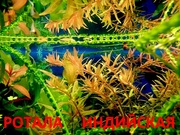 Ротала. НАБОРЫ растений для запуска акваса. ПОЧТОЙ отправл