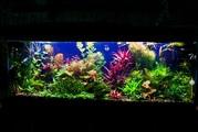 Удобрения(микро,  макро,  калий,  железо) для аквариумных растений. ПОЧ