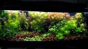 Удобрения(микро,  макро,  калий,  железо) для аквариумных растений. ПО--