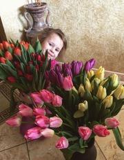 Тюльпаны оптом и в розницу по приятной цене