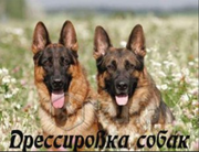 Дрессировка собак любых пород с выездом к владельцу
